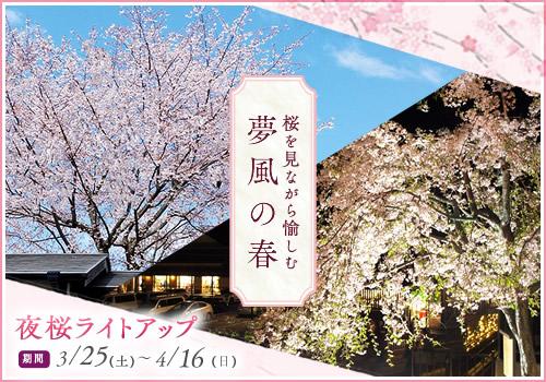 桜を見ながら愉しむ夢風の春(夜桜ライトアップ)